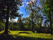 Δέντρα Στοκ φωτογραφία με δικαίωμα ελεύθερης χρήσης
