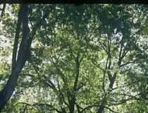 δέντρα Στοκ Φωτογραφία