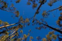 δέντρα Στοκ Εικόνα