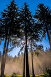 Δέντρα Στοκ φωτογραφίες με δικαίωμα ελεύθερης χρήσης