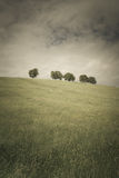 Δέντρα 108 Στοκ Εικόνες