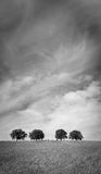 Δέντρα 103 Στοκ Φωτογραφία