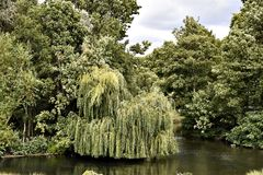 Δέντρα Στοκ Εικόνες