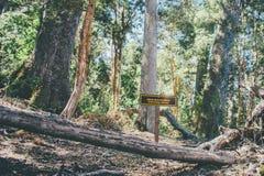 Δέντρα Arrayan Στοκ εικόνα με δικαίωμα ελεύθερης χρήσης