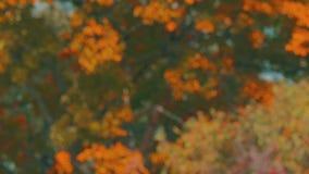 Δέντρα Defocused που ταλαντεύονται στον αέρα 4K η πτώση το πιάτο υποβάθρου απόθεμα βίντεο