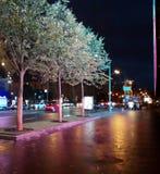 Δέντρα ENight μπροστά από την οθόνη Στοκ Φωτογραφία