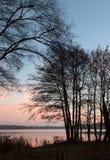 Δέντρα Havel Στοκ εικόνες με δικαίωμα ελεύθερης χρήσης