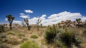 Δέντρα Joshua Στοκ φωτογραφία με δικαίωμα ελεύθερης χρήσης