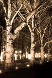 Δέντρα Platane Στοκ φωτογραφία με δικαίωμα ελεύθερης χρήσης