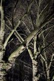 Δέντρα Platane Στοκ εικόνα με δικαίωμα ελεύθερης χρήσης