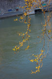 Δέντρα Platanus πέρα από το Tiber Στοκ Εικόνα