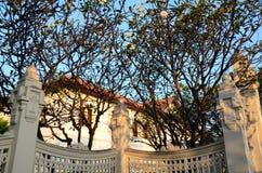 Δέντρα Plumeria στον κήπο Στοκ Φωτογραφία