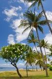 δέντρα plumeria φοινικών Στοκ φωτογραφίες με δικαίωμα ελεύθερης χρήσης