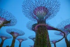 Δέντρα Supergrove ειδώλων κατά τη διάρκεια του λυκόφατος Στοκ Εικόνα