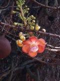 Δέντρο άλατος μια άλλη καλλιτεχνική δημιουργία της μητέρας φύση Στοκ φωτογραφία με δικαίωμα ελεύθερης χρήσης