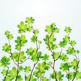 δέντρο άνοιξη ανασκόπησης Στοκ φωτογραφία με δικαίωμα ελεύθερης χρήσης