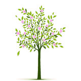 Δέντρο άνοιξη με τα φύλλα και τα λουλούδια Στοκ φωτογραφίες με δικαίωμα ελεύθερης χρήσης