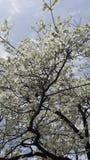 Δέντρο άνοιξη στοκ εικόνα