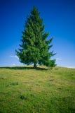δέντρο έλατου Στοκ φωτογραφίες με δικαίωμα ελεύθερης χρήσης