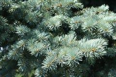 δέντρο έλατου στοκ εικόνα με δικαίωμα ελεύθερης χρήσης