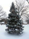 Δέντρο έλατου Ντάγκλας με το χιόνι στους κλάδους Στοκ φωτογραφία με δικαίωμα ελεύθερης χρήσης