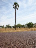 δέντρο ήλιων φοινικών κάτω Στοκ φωτογραφία με δικαίωμα ελεύθερης χρήσης