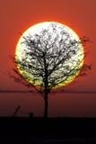 δέντρο ήλιων στοκ φωτογραφία με δικαίωμα ελεύθερης χρήσης