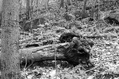 Δέντρο ή ζωικό κεφάλι; Στοκ εικόνα με δικαίωμα ελεύθερης χρήσης
