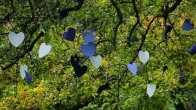 Δέντρο αγάπης, διαμορφωμένα καρδιά έγγραφα χαρτονιού που κρεμιούνται για τους εραστές απόθεμα βίντεο