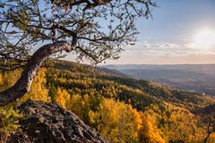Δέντρο αγριόπευκων στα βουνά Στοκ φωτογραφία με δικαίωμα ελεύθερης χρήσης