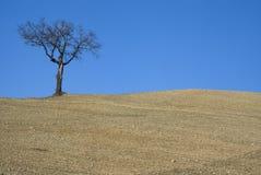 δέντρο αγροτικής γης Στοκ Εικόνες