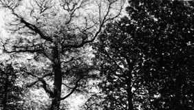 δέντρο ανασκόπησης Στοκ φωτογραφία με δικαίωμα ελεύθερης χρήσης