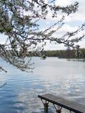 Δέντρο ανθών, λίμνη, πάκτωνας σε ένα πάρκο Στοκ φωτογραφία με δικαίωμα ελεύθερης χρήσης