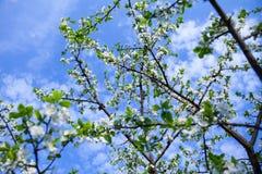 Δέντρο ανθών πέρα από το υπόβαθρο φύσης Στοκ εικόνες με δικαίωμα ελεύθερης χρήσης