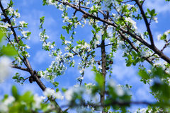 Δέντρο ανθών πέρα από το υπόβαθρο φύσης Στοκ φωτογραφίες με δικαίωμα ελεύθερης χρήσης