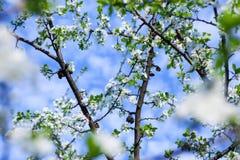 Δέντρο ανθών πέρα από το υπόβαθρο φύσης Στοκ Εικόνες