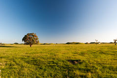 Δέντρο ανθών στο αγρόκτημα στοκ φωτογραφίες με δικαίωμα ελεύθερης χρήσης