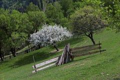 Δέντρο ανθών της Apple στα αγροτικά βουνά της Ρουμανίας Στοκ Εικόνες