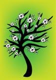 δέντρο ανθών Στοκ Εικόνες