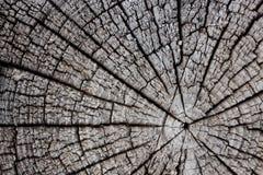 δέντρο αποκοπών Στοκ Εικόνες