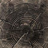 δέντρο αποκοπών Στοκ φωτογραφίες με δικαίωμα ελεύθερης χρήσης