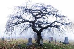 Δέντρο αποκριών στο νεκροταφείο στην ομίχλη της Πενσυλβανίας Στοκ φωτογραφία με δικαίωμα ελεύθερης χρήσης