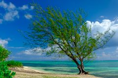 Δέντρο από την καραϊβική θάλασσα στοκ εικόνες με δικαίωμα ελεύθερης χρήσης