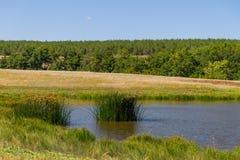 Δέντρο από τη λίμνη Στοκ εικόνες με δικαίωμα ελεύθερης χρήσης