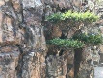 Δέντρο από το βράχο στοκ εικόνες με δικαίωμα ελεύθερης χρήσης