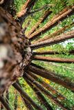 Δέντρο από το κατώτατο σημείο στοκ φωτογραφία με δικαίωμα ελεύθερης χρήσης