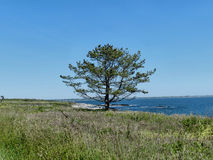 Δέντρο από το νερό Στοκ φωτογραφία με δικαίωμα ελεύθερης χρήσης