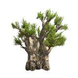 Δέντρο αδανσωνιών που απομονώνεται. Διανυσματική απεικόνιση Στοκ Εικόνες