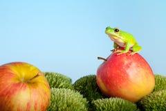 δέντρο βατράχων μήλων Στοκ Εικόνες