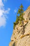 δέντρο βράχου γουνών Στοκ Εικόνα